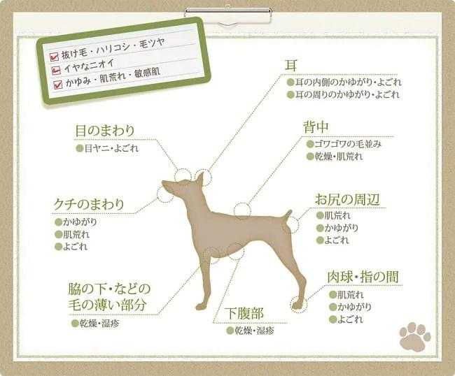 犬の肌トラブル