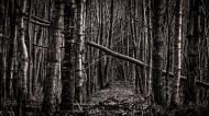 Tyrrestrup skov