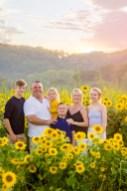 Sunflowers (19)