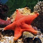 Discount on Advance Tickets to Sea Life Aquarium Kansas City
