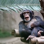 Kansas City Zoo Tickets, Discounts and FREE Days