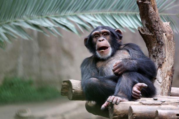 Kansas City Zoo Tickets, Discounts and FREE Days - Kansas