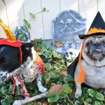 Dog Friendly Halloween Events in Kansas City for 2020