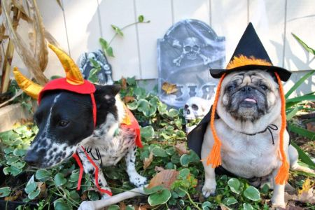 Halloween dog events in Kansas City - two dogs in costume