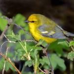 Bird Walks at the Overland Park Arboretum