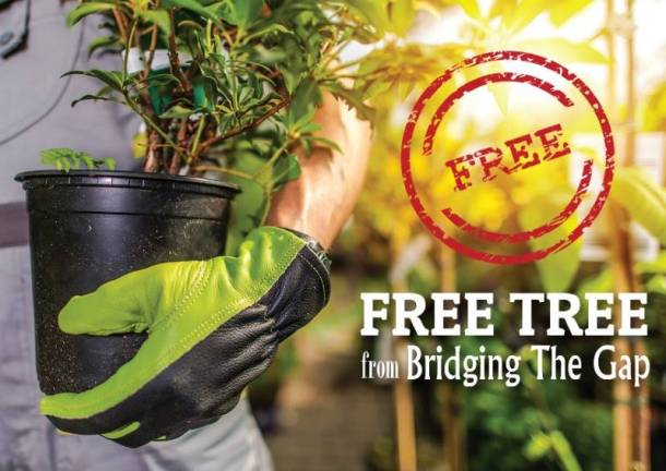 Free Trees from Bridging the Gap