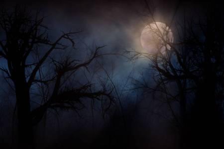 Kansas City Haunted Houses - haunted forest