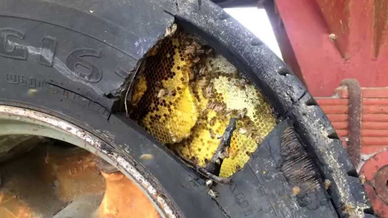 Removing Honeybees From Heavy Truck Tire