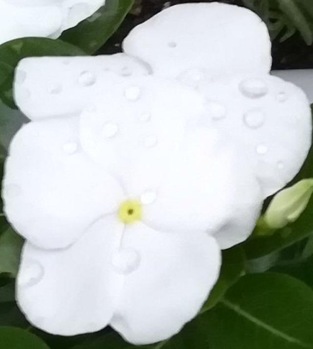 P10 lite flower 2 8M zoom