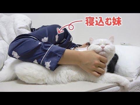 高熱で寝込んでいる妹に捕獲されて満更でもない猫!