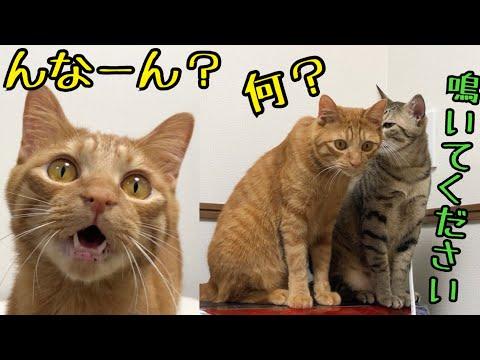 【猫 鳴き声】誰も居ないクローゼットが気になる猫!