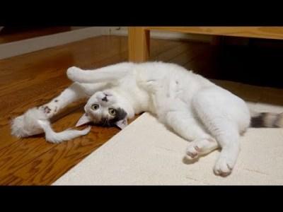 ネズミのおもちゃに野性が爆発しちゃう先輩猫と後輩子猫