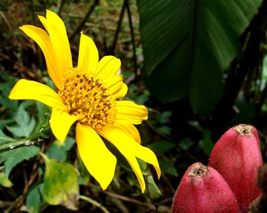 Flora fauna paisaje