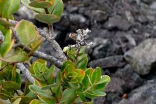Curious vegetation