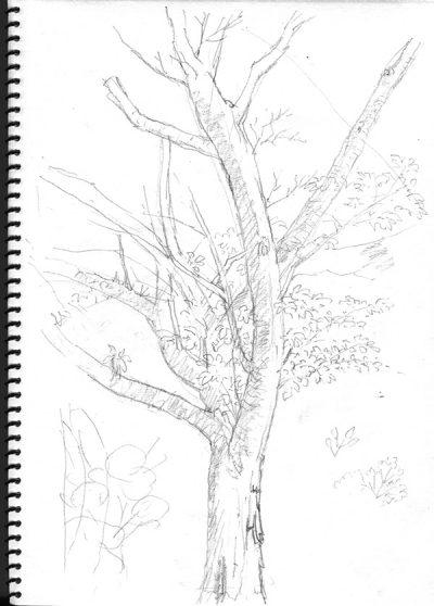 木のスケッチ