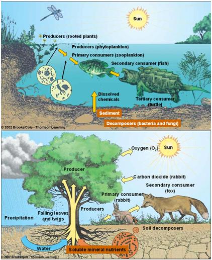 Manfaat Energi Matahari Bagi Hewan : manfaat, energi, matahari, hewan, August, Welcome, Journals