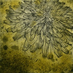 Dandelion yellow・たんぽぽ黄色 Etching・Spit bite・Two plates two colors・Gampi-Paper(Mino) エッチング・スピットバイ ト・2版2色・雁皮刷り・美濃和紙 image size H12.9cmxW13cm ed.30 2011