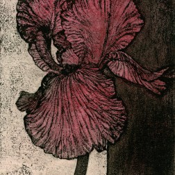 Pink Iris・ピンクのアイリス Etching・Aquatint・Two plates two colors・Gampi-Paper(Mino) エッチング・アクアチント・2版2色・雁皮刷り・美濃和紙 image size H8.8cmxW8.1cm ed.30 2011