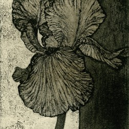 Sepia Iris・セピアのアイリス Etching・Aquatint・Two plates two colors・Gampi-Paper(Mino) エッチング・アクアチント・2版2色・雁皮刷り・美濃和紙 image size H8.8cmxW8.1cm ed.30 2011