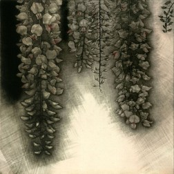 Wisteria02・藤の花02 Etching・Mezzotint・Two plates two colors・Gampi-Paper(Mino) エッチング・メゾチント・2版2色・雁皮刷り・美濃和紙 image size H24.6cmxW24.6cm ed.30 2013