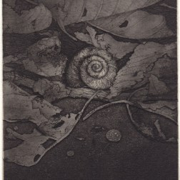 Shell 03・貝 03 Etching・Aquatint・Gampi-Paper(Mino) エッチング・アクアチント・雁皮刷り・美濃和紙 image size 14.5cmx9.8cm ed.30 2013