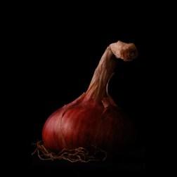 Red OnionDigital