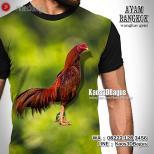 Kaos Ayam Aduan, Kaos Gambar AYAM BANGKOK, Wangkas Geni, Ayam Jago, Kaos3D