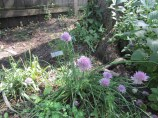 Chives & herbs
