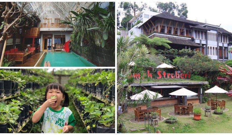 Rumah Stroberi Organic Farm and Lodge, Penginapan di Lembang, Bandung yang Punya Fasilitas Kebun Stroberi dan Bisa Panen Sendiri