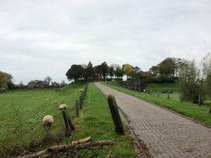 Friesland terp