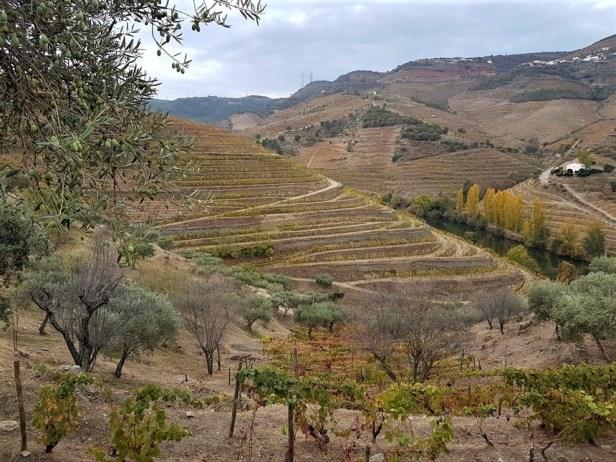 Douro wandeling wijngaard