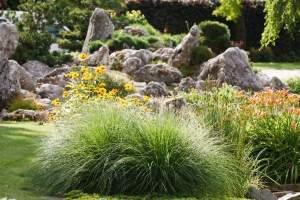 Grupa Kapias trawy i skalniak w ogrodzie