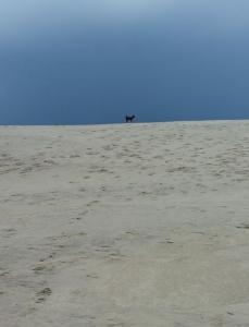 Kaprys on the dunes