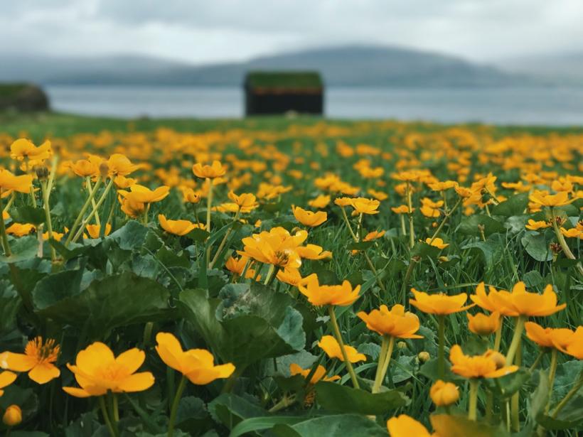 Kirkjubour - Faroe Islands on the island of Streymoy