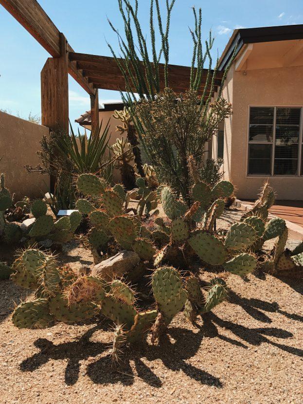 Various cactus plants