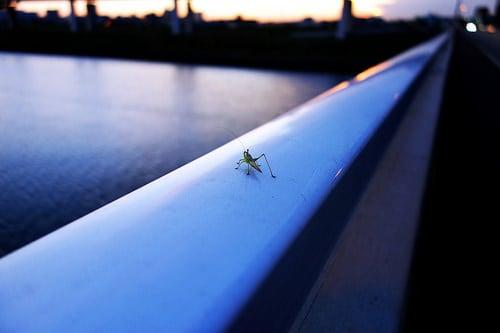 15285425516_e64149bb3b_grasshopper