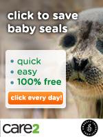 Click to Defend Baby Seals