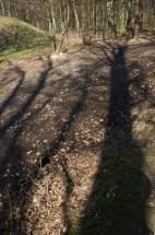 Bratislava Forest Park - Koliba - tree shadows