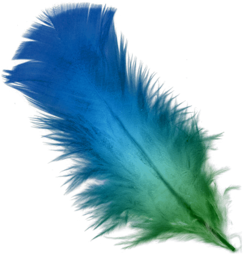 blue_and_green_feather with white background