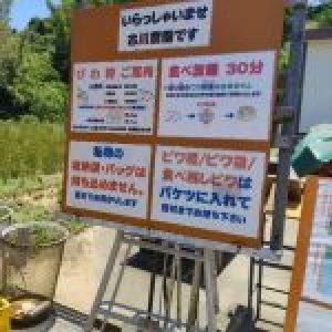 #淡路島#びわ狩り#古川農園