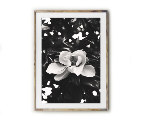 Fine art for the Southern home! Beautiful photography and typography prints created by Kara Layne now available to purchase from the Kara Layne Shop. Come and browse the collection and find something you love and enjoy it in your own home! #WallArtIdeas #ScenesOfTheSouth #SoutherLiving #ModernFarmhouseDecorIdeas #FineArtPrints #Magnolia #MagnoliaTree #MagnoliaBloom