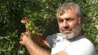Ermenek zeytini marka olma yolunda