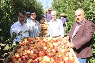 Türkiye'nin elma deposu Karaman'da 55 gün sürecek olan elma hasadı başladı
