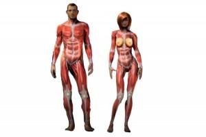 musculos-por-dentro-deportista_thumb_e