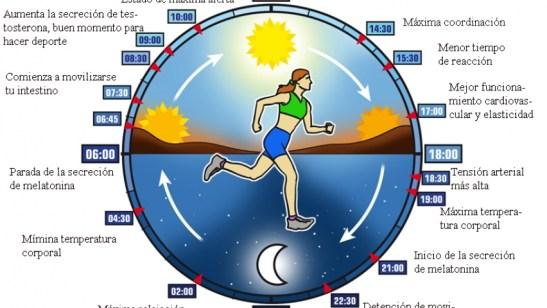 ciclo-circadiano-textos