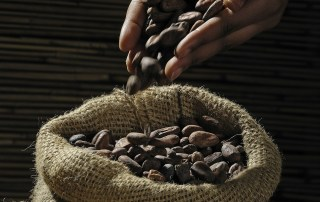 Chokolade møntfod