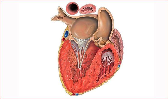Схема развития кардиосклероза