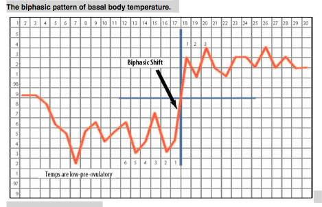 photo relating to Basal Body Temperature Chart Printable known as Basal Temp Chart - Otvod