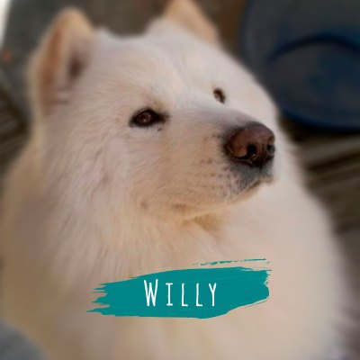 willy-pet-shop-karecone