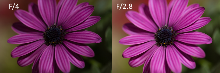 A side by side compairson of the same subject, photographed once under-exposed with an aperture of F4 and correctly exposed at an aperture of F/2.8